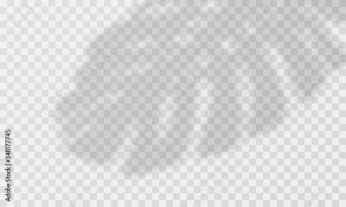 Tropical Leaves Shadow Overlay Vector Transparent Palm Leaves Overlay Buy This Stock Vector And Explore Similar Vectors At Adobe Stock Adobe Stock Find & download free graphic resources for tropical leaves. adobe stock
