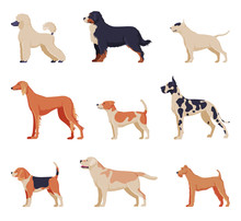 Purebred Dogs Collection, Beagle, Dalmatian, Labrador, Poodle, Greyhound Pet Animals, Labrador Retriever, Fox Terrier Pet Animals, Side View Vector Illustration