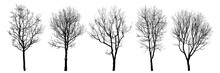 .Winter Trees Silhouettes Coll...