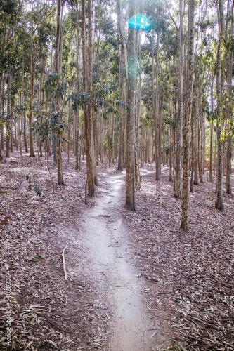 Photo Buxton Mountain Bike Park in Australia