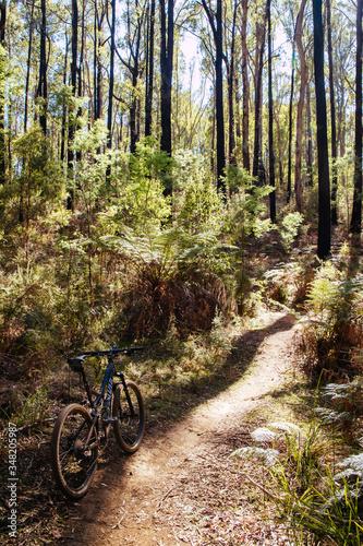 Fotomural Buxton Mountain Bike Park in Australia