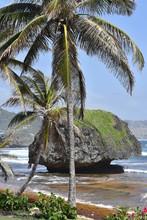 Tropical Beach Island With Pal...