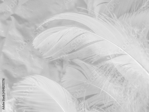Fényképezés Beautiful abstract white feathers on white background and soft black feather tex