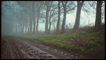 Tree Lined Muddy Road In Fog