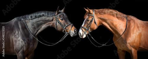 Fototapeta Two horse in bridle portrait. Horizontal banner obraz