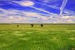 Leinwandbild Motiv Meadow With Trees
