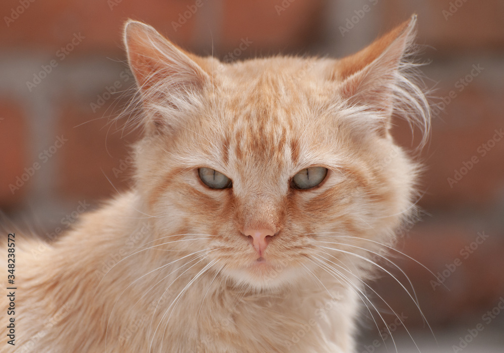 Fototapeta felinos, animal, mascota, gatita, felíno, cuca, pelaje, domestica, retrato, ocular, felinos, blanco, mascota, felinos, cara, naturaleza, ocular, gato atigrado, joven, bigote, mirada, mamífero, verde,