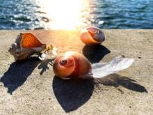 Sunset Sea Seashells And Bird ...