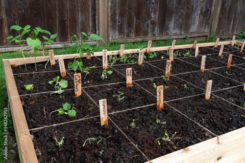 Photographie Section of a backyard raised square foot companion vegetable garden
