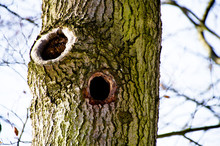 Close-up Of Holes In Tree Trunk