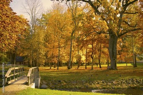 Fotografie, Obraz Trees In Park During Autumn