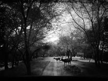 Deer Crossing Road In Forest