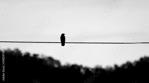 Black Raven b&w Canvas-taulu