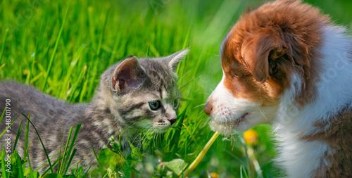 cute little kitten and puppy in the garden grass #348301790