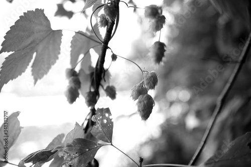 Canvas Close-up Of Leaves On Twig