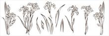 Set With 12 Detailed Irises, I...