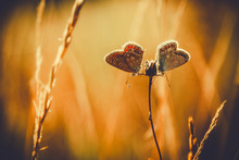 Butterflies On Flower Bud