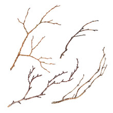 Set Of Tree Branches Isolated ...