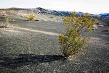 Plants Growing At Death Valley National Park