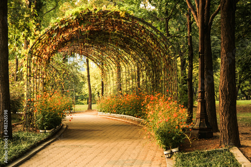 Diminishing Perspective Of Footpath Amidst Trees And Plants In Park Fototapet