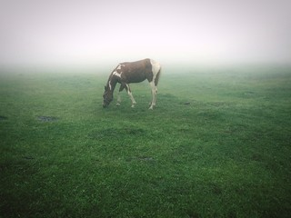 Horse Grazing On Grassy Field During Foggy Weather