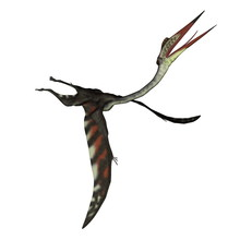 Quetzalcoatlus Flying Head Up Isolated In White Background - 3D Render