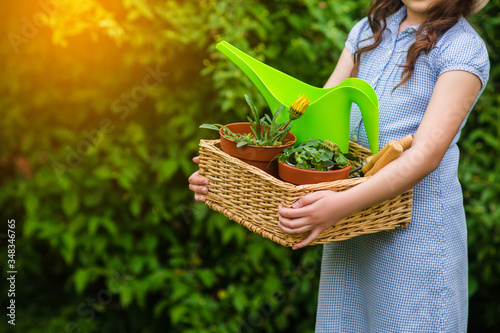 Fototapeta smiling cute girl gardener holding basket and horticultural tools in garden on sunny day. Happy childhood. Summer activities obraz