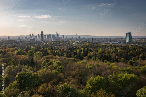 Fototapeta Plants Growing In City Against Sky obraz