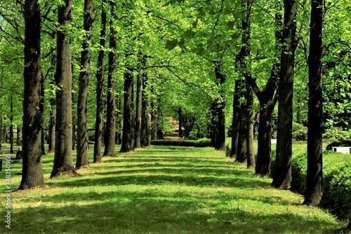 新緑の木々達