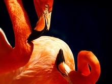 Close-up Of Flamingos At Night