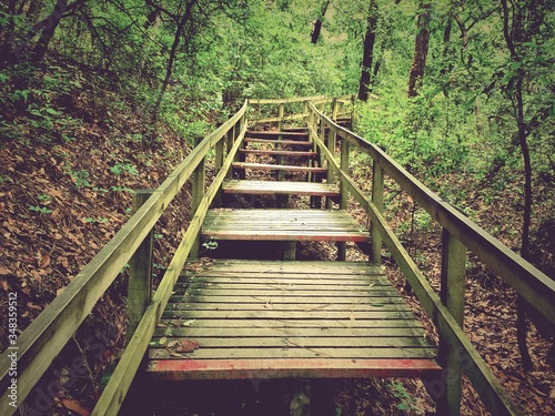 Photo Footbridge In Forest
