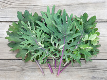Red Russian Kale Extravaganza, Just Harvested. Organic Home Grown Veggie Bounty / Harvest Started From Seeds, Indoors. The Green And Purple Curly Kale Leaves Are Arranged On Wooden Background.