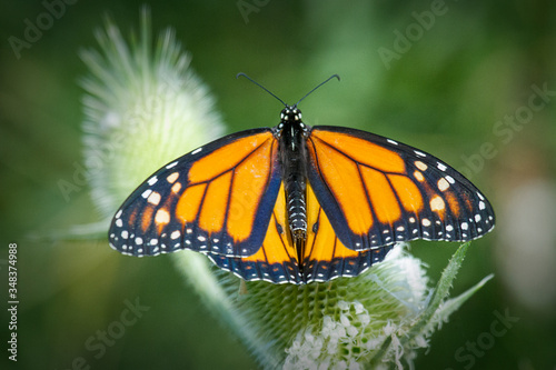 Close-up Of Monarch Butterfly Perching On Green Plant Canvas Print