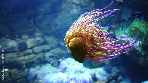 Fotografia Jellyfish Swimming In Sea