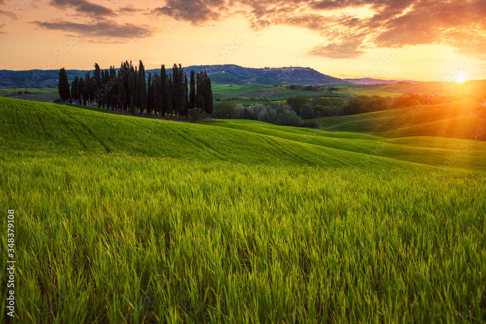 Fototapeta Rolling fields of Tuscany at sunset