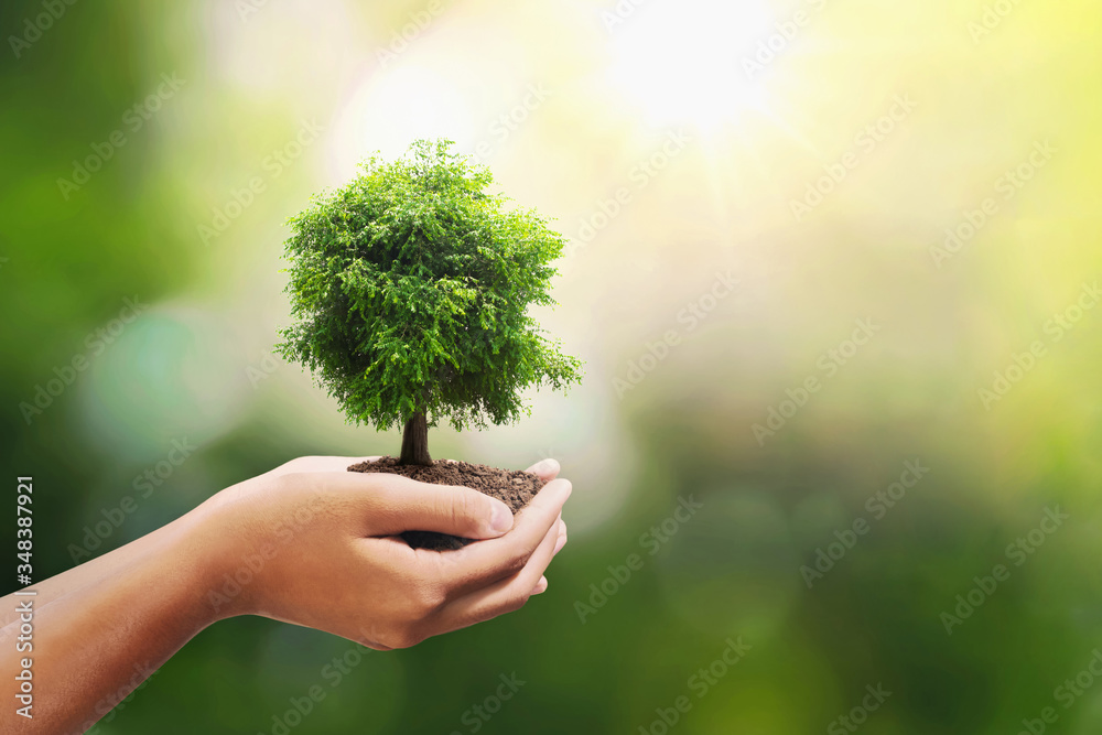 Fototapeta tree growing on soil in hand holding with sunshine background. eco environment concept