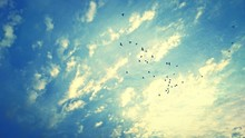 Low Angle View Of Birds Flying In Cloudy Sky