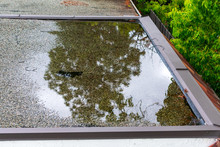 Ponding Standing Water On A Flat Roof After Heavy Rain
