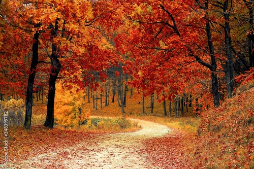 Fototapeta Scenic View Of Road Amidst Trees During Autumn