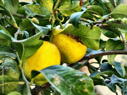 Canvastavla Close-up Of Fruits On Tree