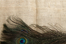 Picture Of Peacock's (male Pea...