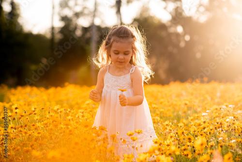 Cuadros en Lienzo Little toddler girl in a white dress picking flowers in a black eye Susan flower field