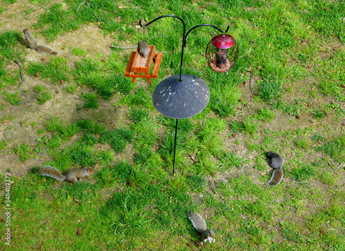 The top view of two bird feeders equipped with squirrel baffle Canvas Print