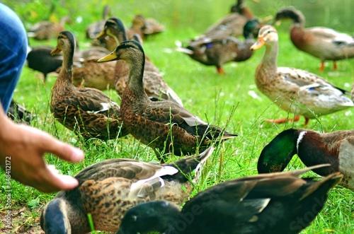 Leinwand Poster Bird On Grass