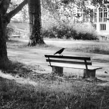 Raven On Empty Bench