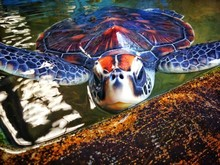 Close-up Surface Level Of Turtle In Water