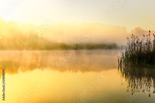 Fotomural Golden Foggy Morning over Ponds