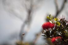 Bee Flying Towards Flower