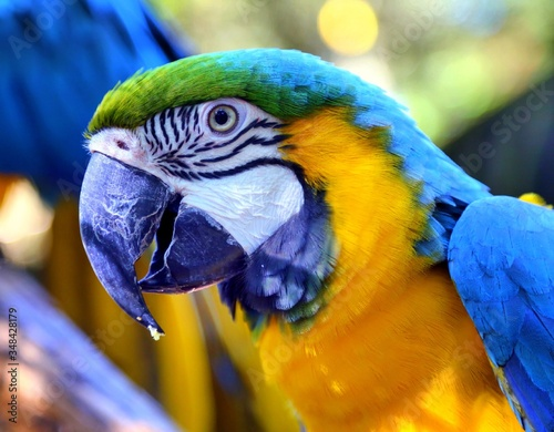 Photo Close-up Of Gold And Blue Macaw