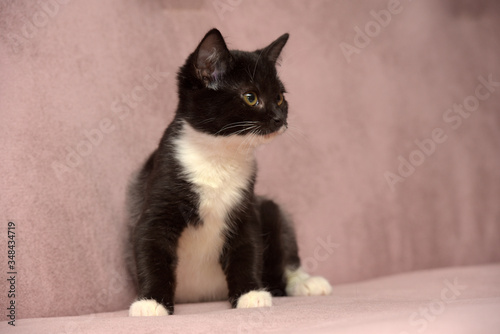 black and white little kitten on a beige background Canvas Print